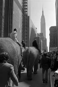Elephants walking down Fifth Avenue 1971