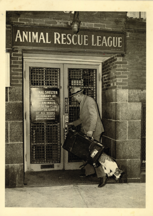 Animal Rescue League