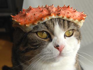 Maru in Crab Hat