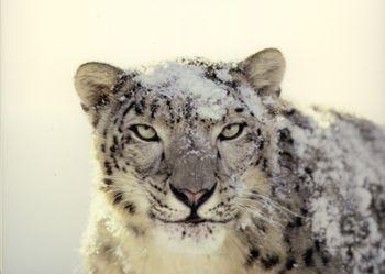 Mac_OS_X_Snow_Leopard
