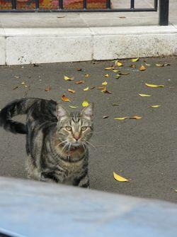 Pussy cat Surrey Hills