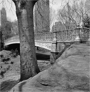 Friedlander Central Park