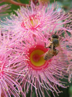 SSS Bee