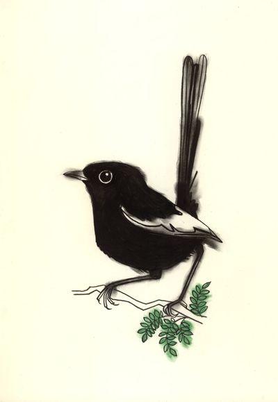 January White winded wren