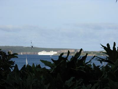 Cruise ship_Matou en Peluche