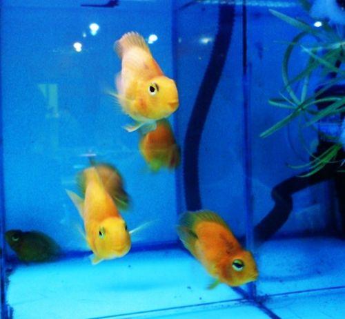 Smiling Fishes sakanami