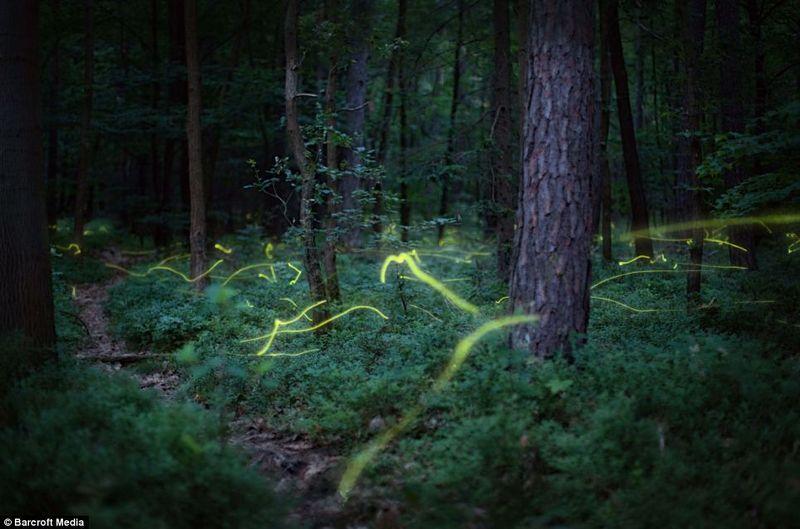 Fireflies_Matou_en_Peluche
