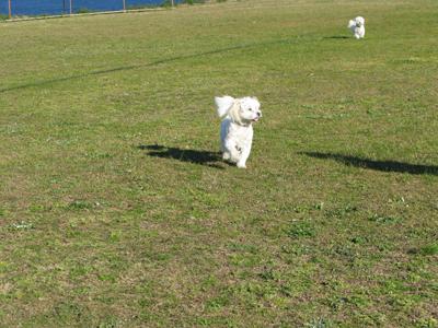 Dogs in the sun Matou en Peluche