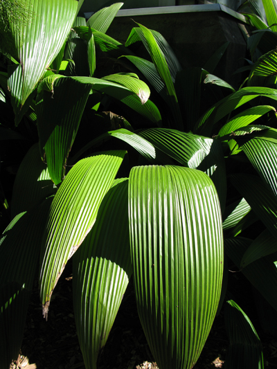 Leaves_Matou_en_Peluche