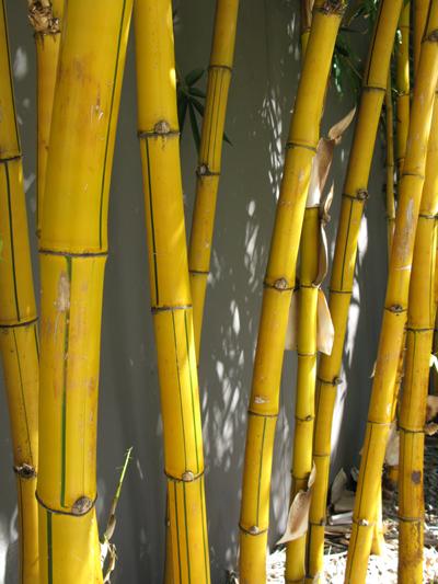 Bamboo_Matou_en_Peluche