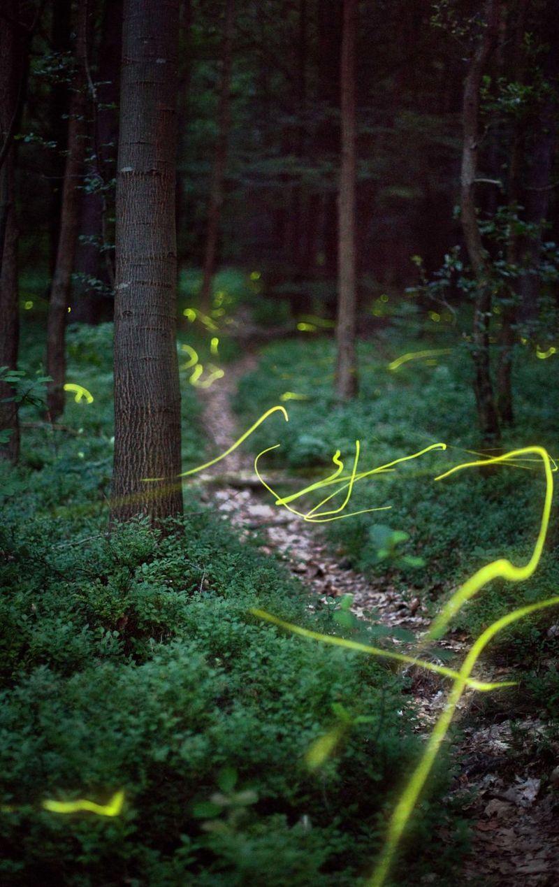 Fireflies_2_Matou_en_Peluche