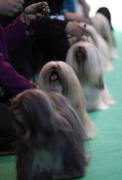 Crufts-Final-day-6
