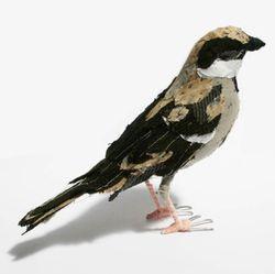 Abigailbrown_sparrow