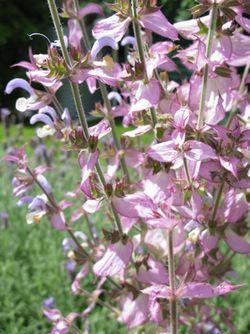Lilac flower 2 Matou en Peluche