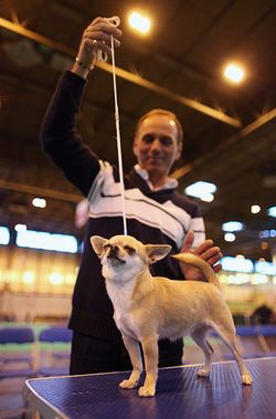 Crufts-Final-day
