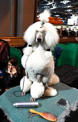 Final-day-of-Crufts-in-Bi-003