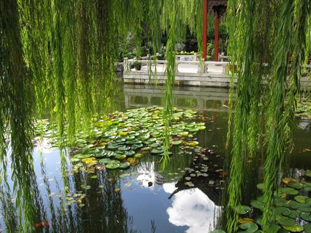 Chinese_Gardens_Matou_en_Peluche_14