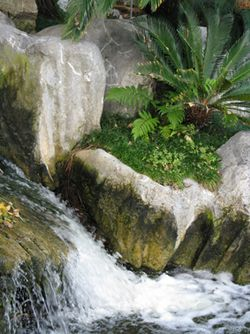 Chinese_Gardens_Matou_en_Peluche_5