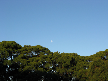 Centennial Park 4 Matou en Peluche