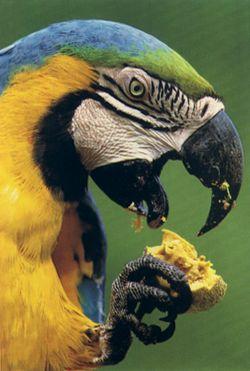 NG-macaw-1