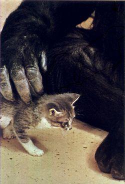Koko's kitten 6 Matou en Peluche