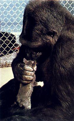 Koko's Kitten 4 Matou en Peluche
