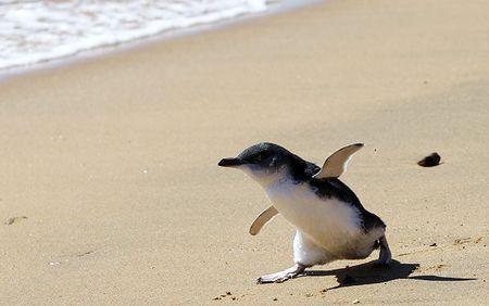Penguin-chic