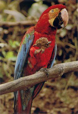 NG-macaw-4
