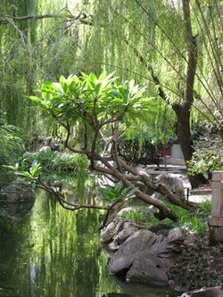Chinese_Garden_Matou_en_Peluche_2