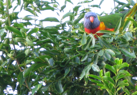 Centennial Park 5 Matou en Peluche