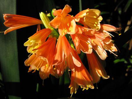 Botanics-8 Matou en Peluche