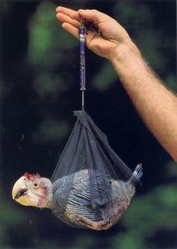 NG-macaw-3