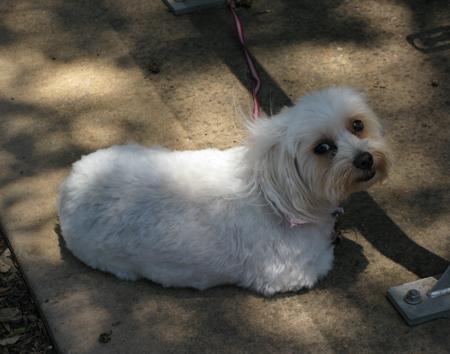 Puppy-Matou en Peluche