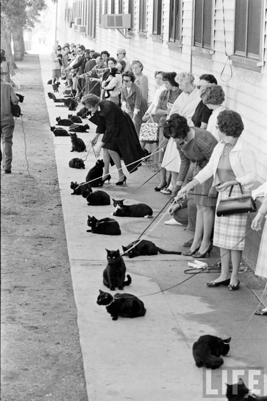 Black_Cat-Auditions-2