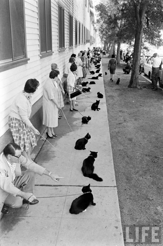 Black_Cat_Auditions-3