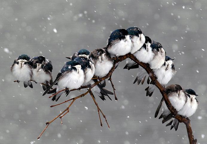 The_Guardian_Birds-perch