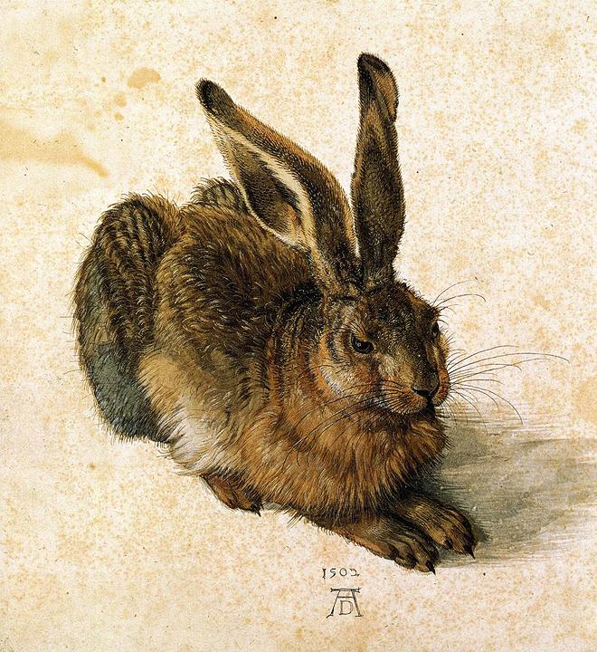 Dürer_2