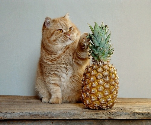 Pussy_Cat