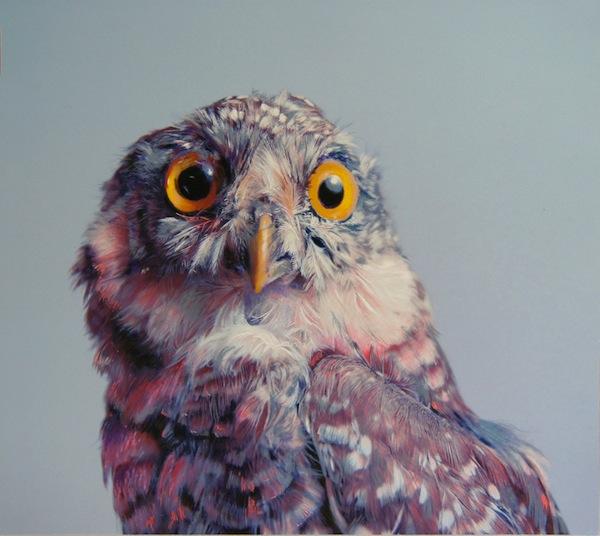 Owl-Pusateri