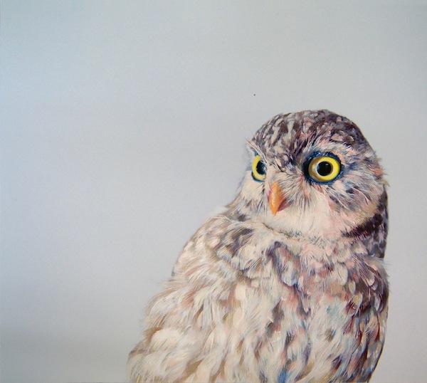 Owl-Pusateri_2