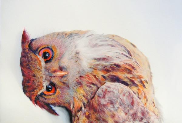Owl-Pusateri-3