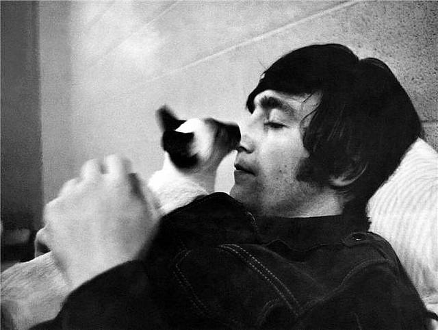 John_Lennon_cat