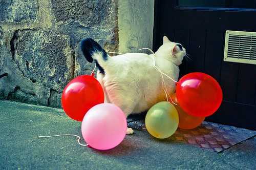 Party_Cat