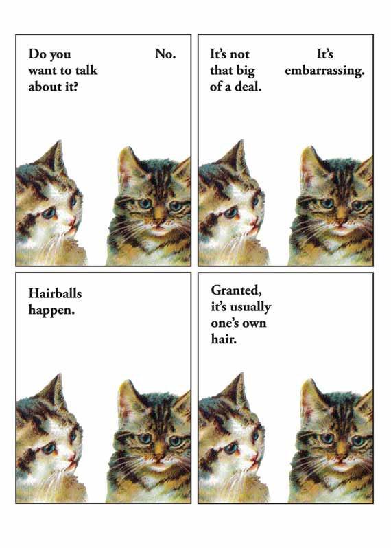 Franticmeerkat_embarrasing_cat
