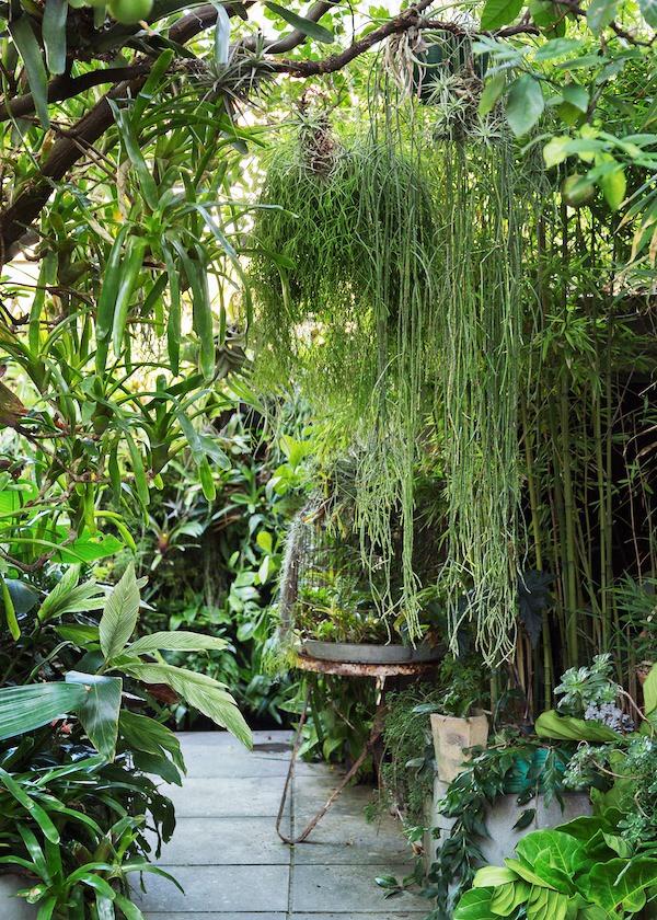 Ian_McMaugh_Garden