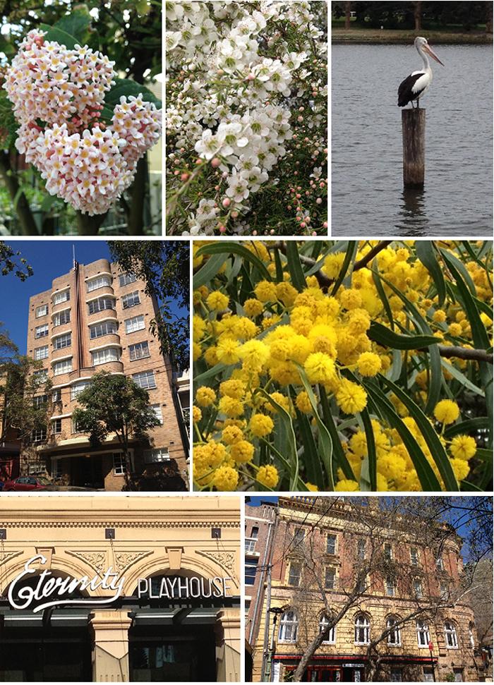 Eastern_Suburbs_Sydney_Matou_en_Peluche