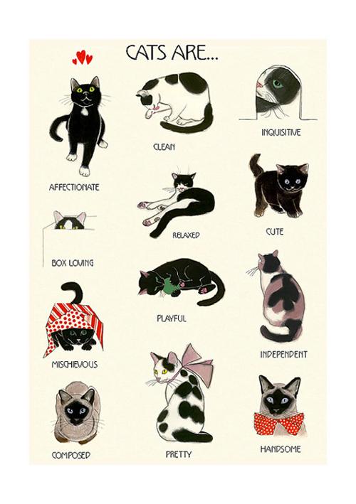 Cats_Are_Matou_en_Peluche