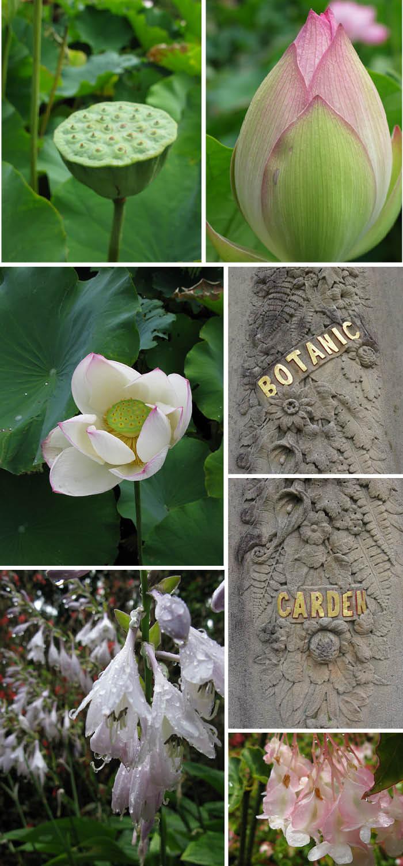 Matou_en_Peluche_Botanic_Gardens