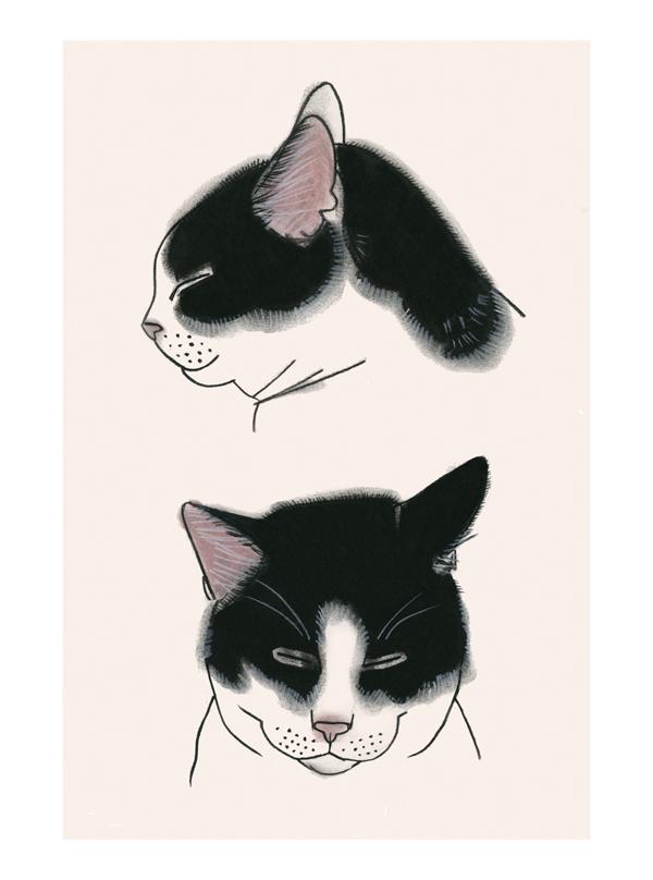 Matou_en_peluche_Study of two cats two