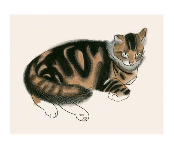 Matou_en_Peluche_cat